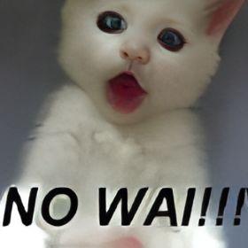 cat_fight_catfights_clip